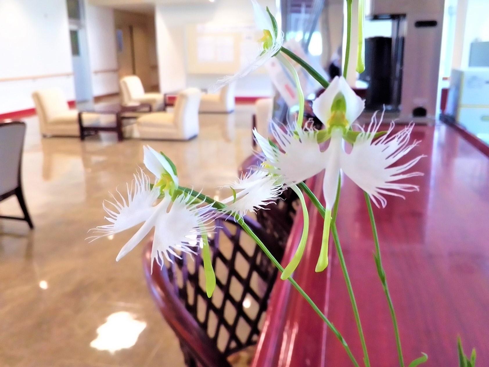 サギソウ 花
